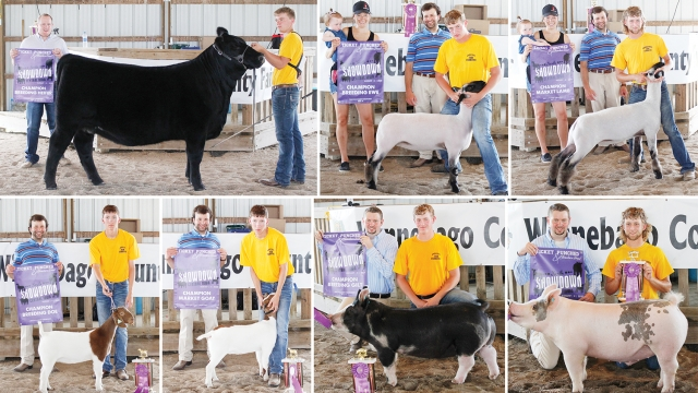 A collage of seven images, each with a fair participant, their animal, and the livestock judge for the category, holding a banner announcing the reward. Most images have a trophy and purple ribbon, as well.